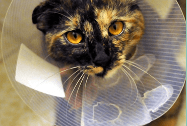 Does Your Cat Get the Care it Needs?
