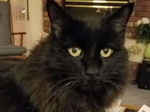 we love the black cat