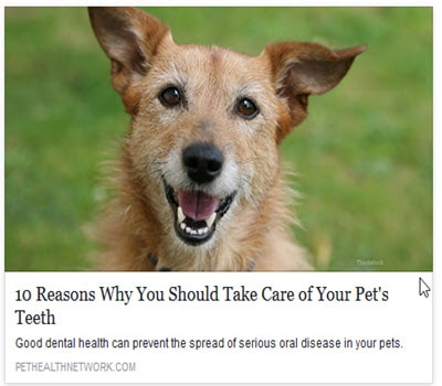 10 reasons for taking care of your pets teeth