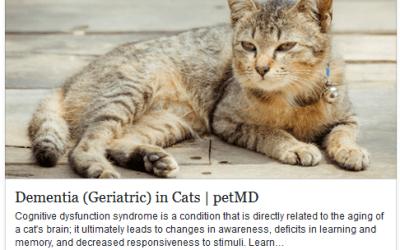Cat Dementia (Geriatric)