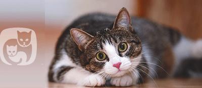 Signs of Neurologic Disease in Cats