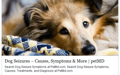 Dog Seizures – Causes, Symptoms and More