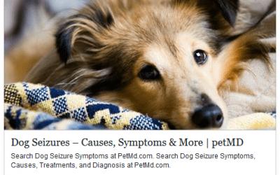 Dog Seizures – Causes, Symptoms and More