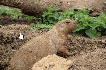 Groundhog Day…Brrr!