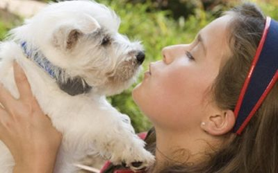 February is Responsible Pet Owners Month – A Little Love, Please!