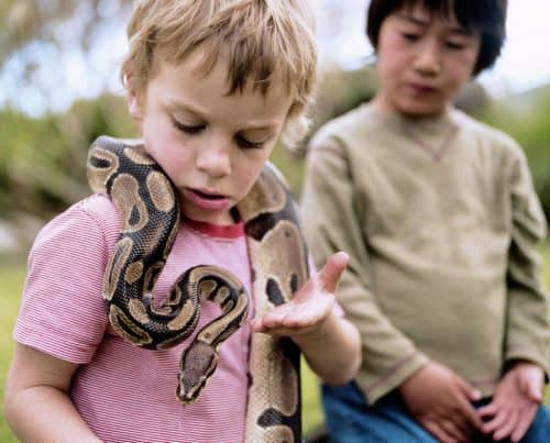 snake and children