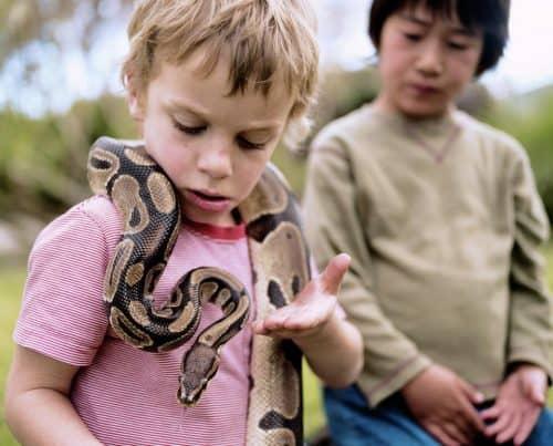 snake and children
