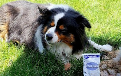 Battling Pet Anxiety with All-Natural ProQuiet