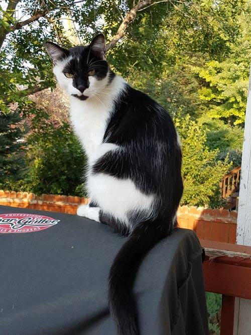 Oliver sitting on the barbie