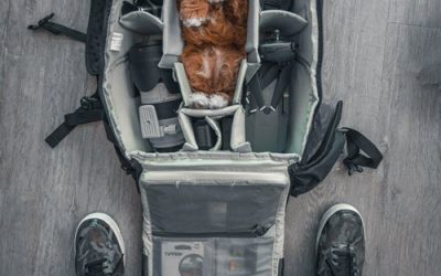 Flying With Dogs? National Pet Travel Safety Day 2019