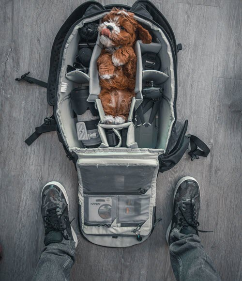 National Pet Travel Safety Day 2019