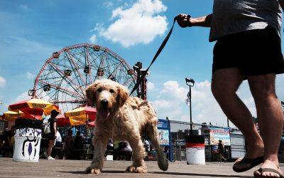 Tips for Traveling With Your Pet Friends This Summer