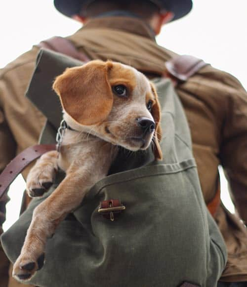 dog travel in backpack