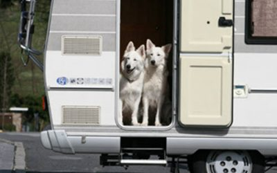 You, Your Pets and RV Travel