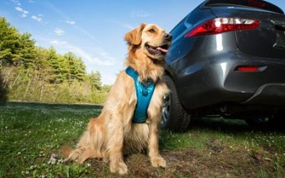 Pet Car Travel Tips