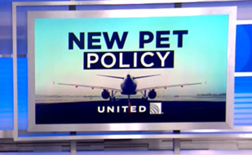 united air new pet policy