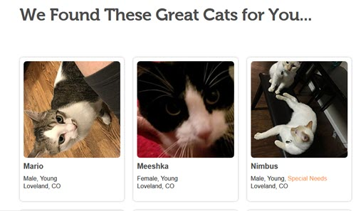 3 of 520 cats for adoption
