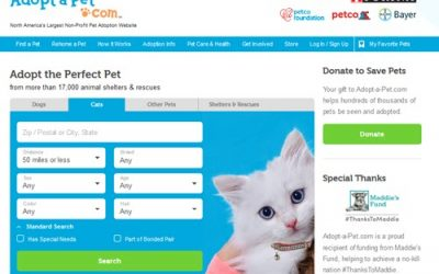 Adopt A Pet Search