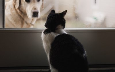 Ten Things Every Cat Owner Should Know