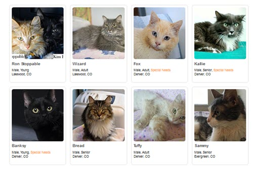 alternates for adoption 2