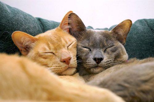bonded-cats
