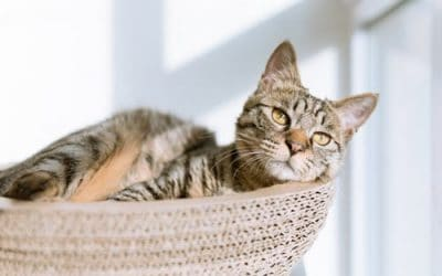 Choosing and Caring for Your New Cat