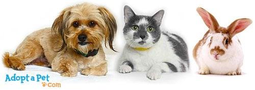 how-to-adopt-dog-cat-rabbit