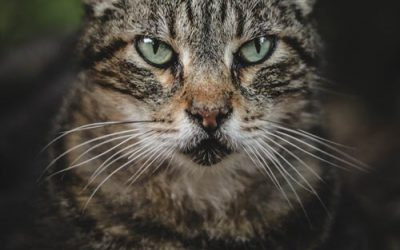 Catch from a Cat? Zoonotic Diseases (Part2)