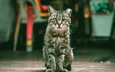 6 Common Misconceptions About Feral Cats