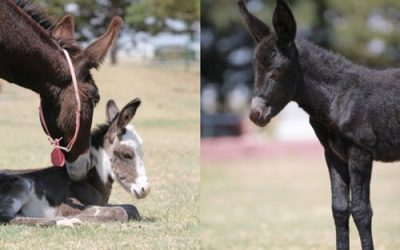 Rescuing Donkeys: Longhopes Donkey Shelter & Adoptions