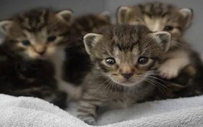 Is Pet Insurance Worth It ? Part 3