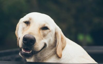 Smelly Dog Breath? Find Out Why