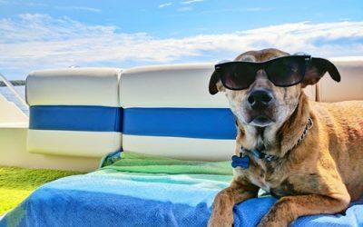9 Most Common Summer Pet Dangers