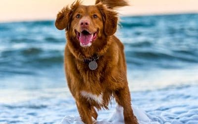 Saltwater Can Be Lethal to Dogs