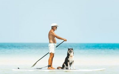 Sunburn is a Risk For Our Pets
