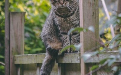 The Secret Life of Your Outdoor Cat