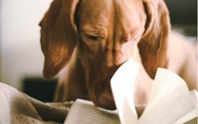 Canine Cancer Awareness