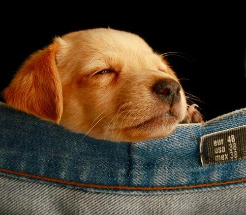DOGust 1st celebrates shelter dog birthdays