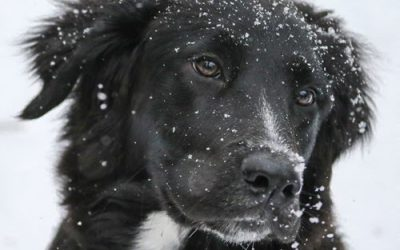 Preparing Your Pooch For Winter Weather