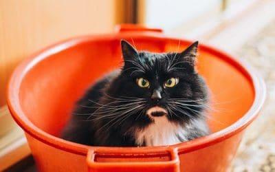 42 Feline Friday Fun Facts