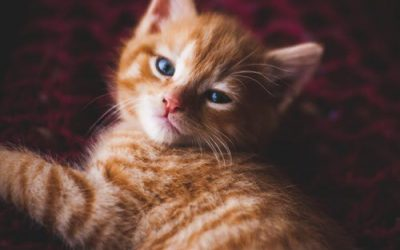 Whether You Call Them Orange, Marmalade or Ginger Cats…They're Lovable