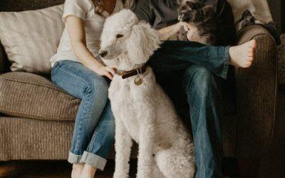 Celebrating National Holistic Pet Day