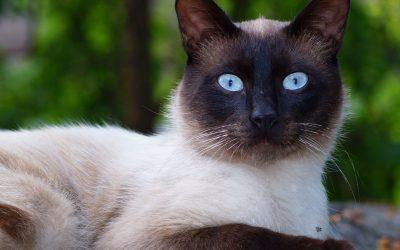 Celebrate International Cat Day August 8th