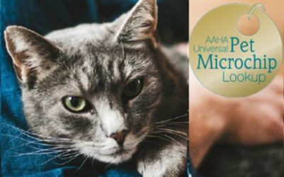 Finding Your Lost Animal – Microchip for Pets Lookup Registry
