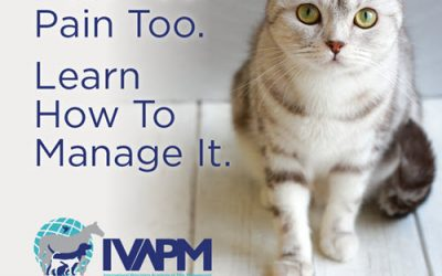 September is Animal Pain Awareness Month