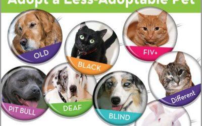 Awareness: Adopt a Less Adoptable Pet Week