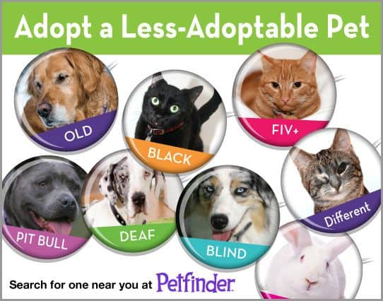 Petfinder Adopt a Less Adoptable Pet