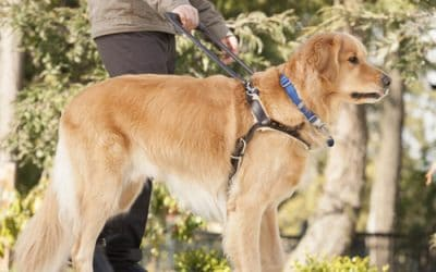 National Guide/Service Dog Month