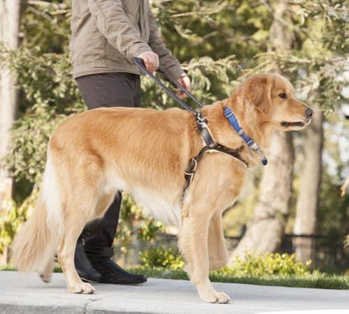 blind-man-with-seeing-eye-dog_SYrxfgrArj