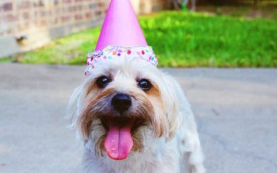 Full Circle Vet Care Anniversary – Our 23rd!